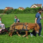 Pony şi Fulger s-au împrietenit cu prichindeii