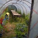 Constantin: Staţiunea Pomicolă Bistriţa să fie principalul furnizor pentru pepinierele din Ardeal