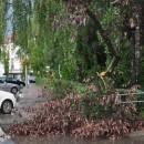 copac rup de furtuna
